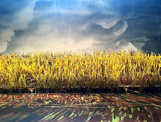 舞台「にんじん」最終景の麦畑。2カ月間、ここで走りまわりました