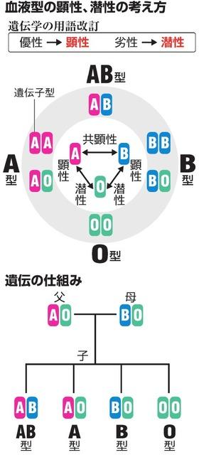 血液型の顕性、潜性の考え方/遺伝の仕組み