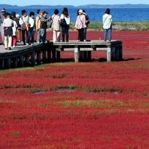 秋色、足元に 網走でサンゴ草見ごろ