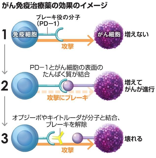 がん免疫治療薬の効果のイメージ
