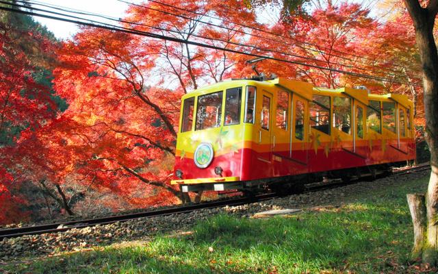 紅葉の中を走るケーブルカー