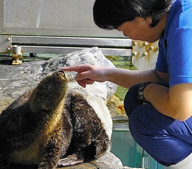ラッコのカンナと飼育係の大須賀陽子さん=茨城県大洗町のアクアワールド・大洗