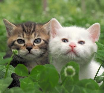 岩合光昭さん「猫が興味を持ってくれるときがチャンス」