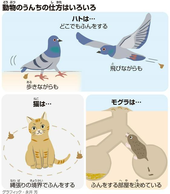 動物(どうぶつ)のうんちの仕方(しかた)はいろいろ<グラフィック・永井芳>