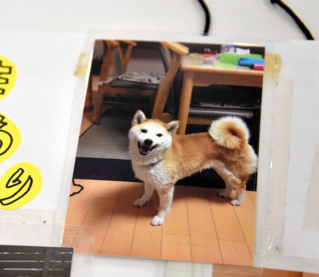 連載「ともに学校へ」に登場した、入院中の男子生徒を元気づけようと愛犬の写真が届けられた=家族提供