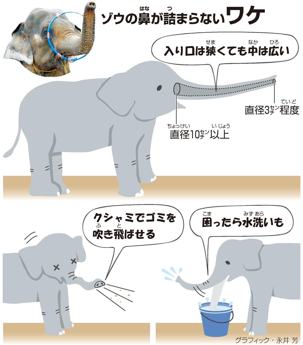 ゾウの鼻(はな)が詰(つ)まらないワケ<グラフィック・永井芳>
