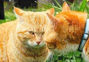 おっとりしたコムギ(左)が、19日放送回では荒々しくなる?
