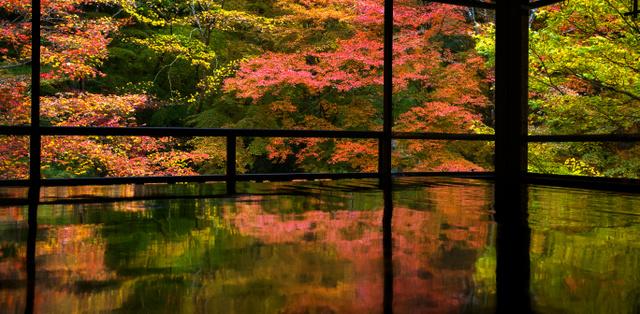 瑠璃光院の書院2階の間では、窓に広がる紅葉が机に映り込んでいた(一般公開時間前に撮影)=20日、京都市左京区、佐藤慈子…