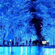 60万個の青のLED、ケヤキ並木を染める 東京・渋谷