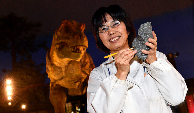 恐竜の復元模型の前で手にするのは、1億2千万年前の化石が埋まった岩石。「複雑な形の化石が取り出せるとうれしい」=福井県勝山市の福井県立恐竜博物館、滝沢美穂子撮影