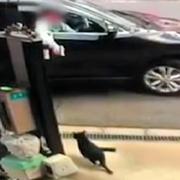 他人の飼い猫招き寄せエアガンで 虐待容疑で書類送検
