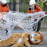 脱走着ぐるみライオン御用! 天王寺動物園で捕獲訓練