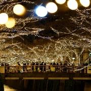 目黒川、黄金色のドーム 50万球ライトアップ 東京