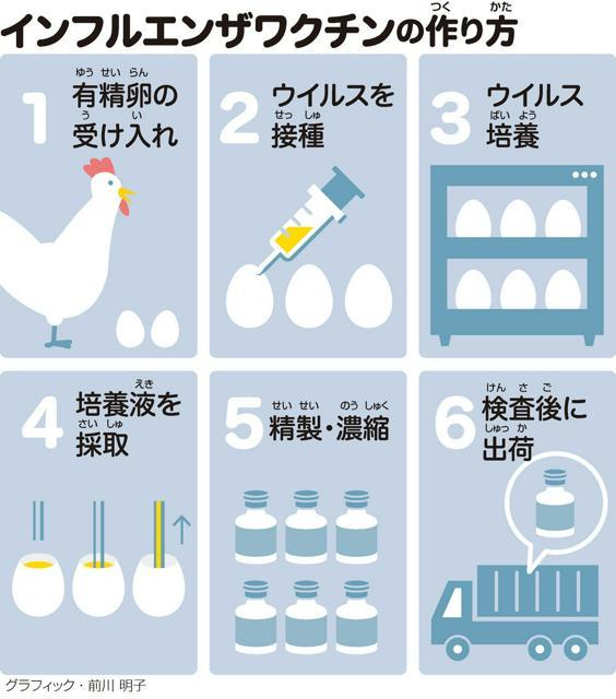 インフルエンザワクチンの作(つく)り方(かた)<グラフィック・前川明子>