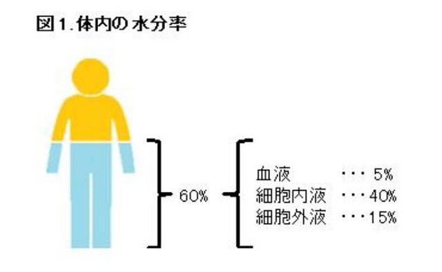 図1:体内の水分率