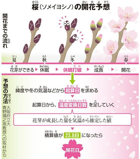 桜(さくら)(ソメイヨシノ)の開花予想(かいかよそう)