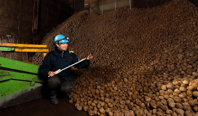 貯蔵庫でジャガイモの温度を測り、状態をチェックする。「イモも呼吸している。そう思うと、どんどん愛着がわいてきます」=北海道帯広市、倉田貴志撮影