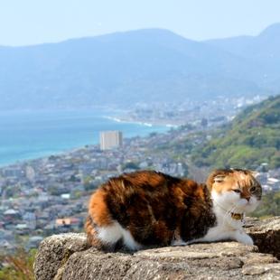 三毛猫とパシャリ、背景は海と富士山 SNSで話題沸騰