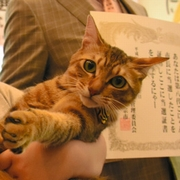 湖南市のこにゃん市長に「きゃら」 新猫3匹の争い制す