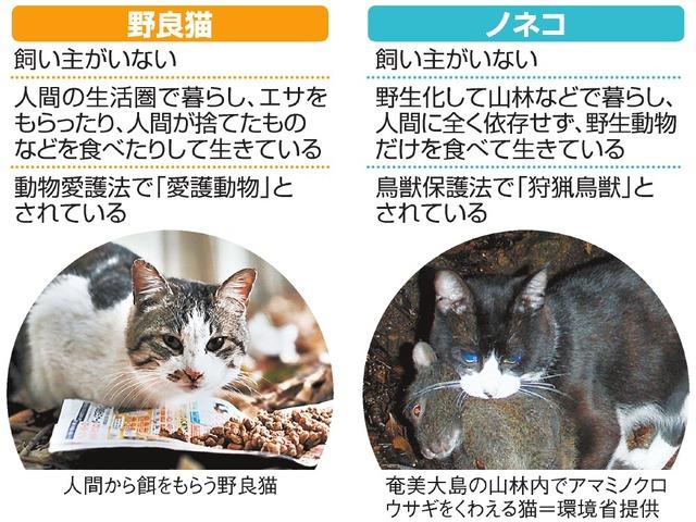 野良猫/ノネコ