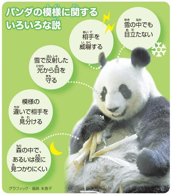 パンダの模様(もよう)に関(かん)するいろいろな説(せつ)<グラフィック・福島未香子>