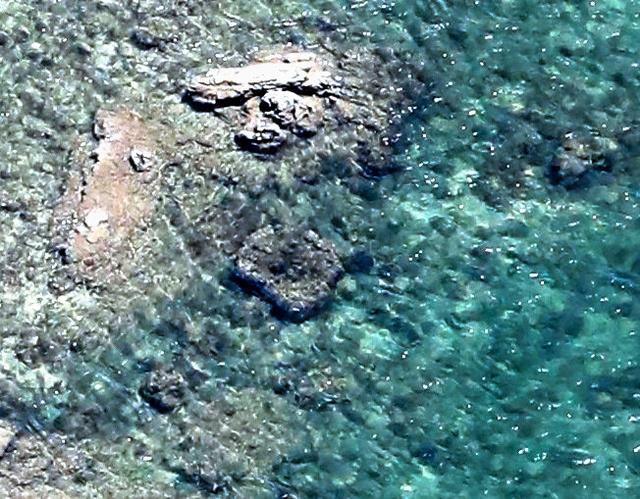 大型サンゴとみられる群体①(中央)=いずれも沖縄県名護市辺野古、朝日新聞社機から、堀英治撮影
