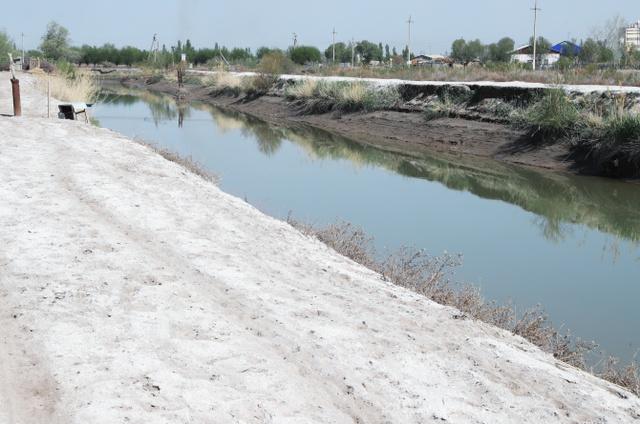 畑の用水路沿いは塩で白くなっていた=2018年4月、ウズベキスタン、川村直子撮影