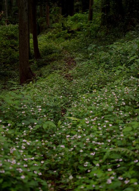 かつての牧場はうっそうと木が茂り、石垣や道の跡が残る=千葉県鴨川市