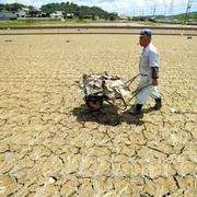 水害と酷暑「もう米は…」 干からびた水田、ゴミを拾う