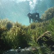 潜っても、潜っても… 水底の硬貨、回収するダイバー