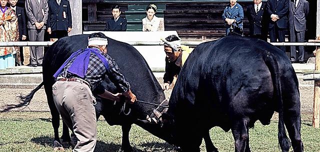 <1967年10月、隠岐諸島>牛突き(闘牛)を観賞する皇太子ご夫妻時代の両陛下