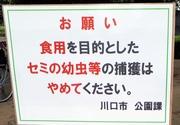 「食用」でセミの幼虫捕らないで 公園に出現の看板話題