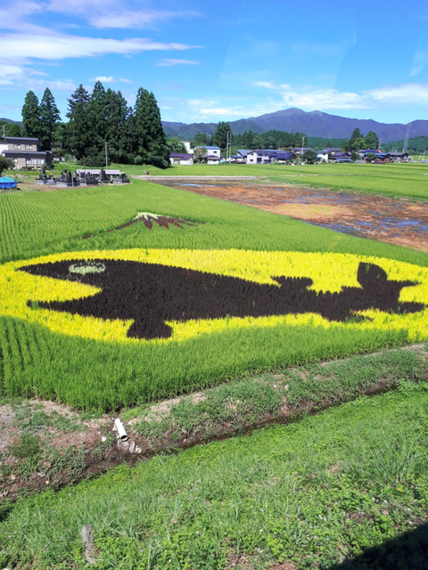 田んぼアート「クニマスと富士山」=秋田県仙北市