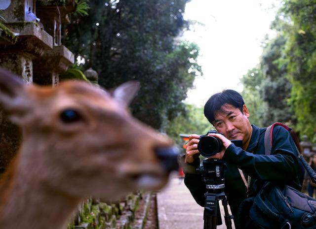 春日大社の参道を歩いていると、鹿がひょいと顔を見せた。すかさずレンズを向けるが、鹿は気にするふうもなく歩んでいった=10月12日、奈良市春日野町