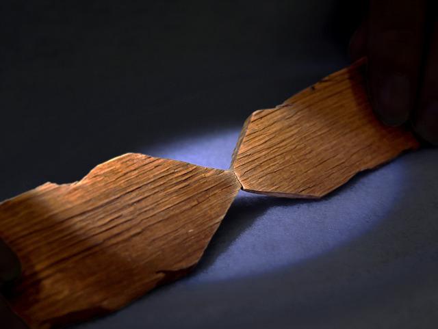 平城宮跡で見つかった二つの木片。合わせると年輪がピタリ一致した=奈良市