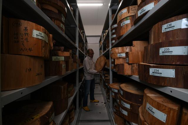 奈良文化財研究所の標本庫には全国各地から集まった、各年代の木の輪切り約1千個が保管されている=奈良市