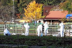 岐阜で豚コレラの陽性確認 同じ園内の豚を殺処分