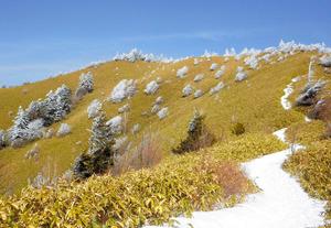 大川入山 冬山に羊の群れ現る?
