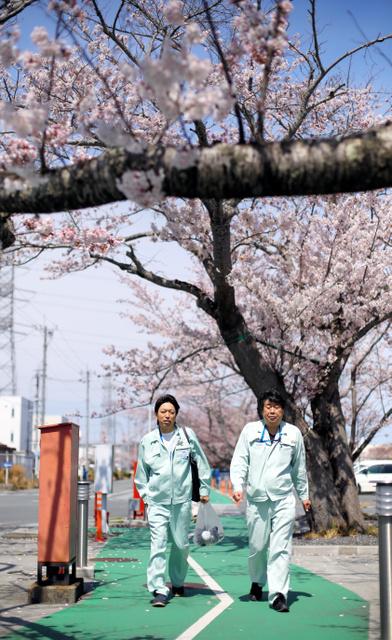 原発構内のサクラの下を歩く廃炉作業員=東京電力福島第一原発
