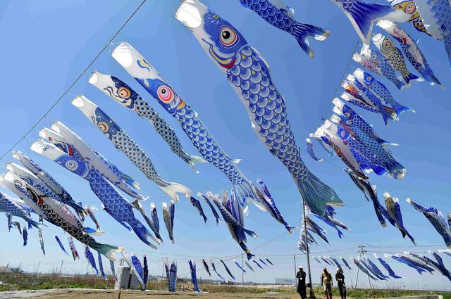大曲浜地区で毎年揚げられてきた青い鯉のぼり=2015年、宮城県東松島市、福留庸友撮影