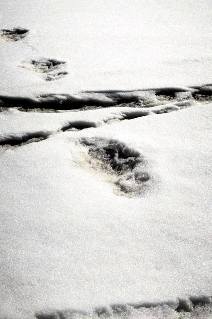 インド軍がツイートした「イエティ」の足跡だという画像=インド軍のツイッターから