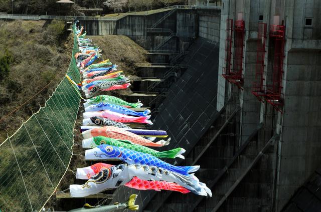 県営滝ダムにかかるこいのぼり=2019年4月23日、岩手県久慈市