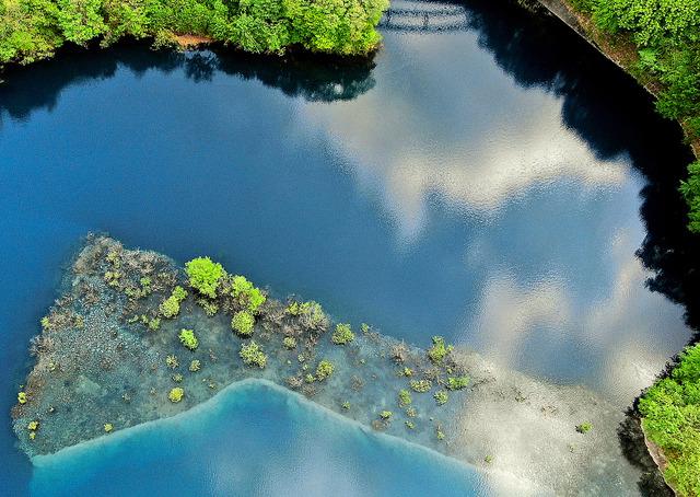 濃い青色に輝く奥四万湖と水没林の新緑の木々=17日午前9時23分、群馬県中之条町、ドローンで西畑志朗撮影
