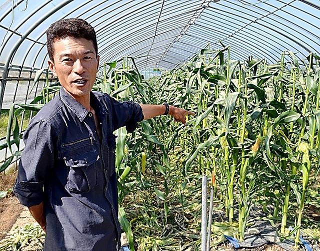 樽川和也さんと収穫間際のトウモロコシ=6月、福島県須賀川市