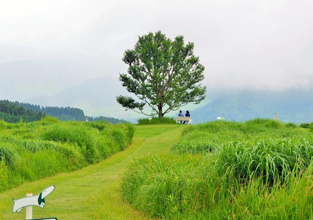 葉祥明さんの絵の世界を再現したという庭=2019年7月、熊本県南阿蘇村河陽