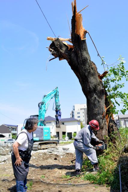 桜が切られるのを見守る千葉静子さん(左)=5日、仙台市若林区舟丁