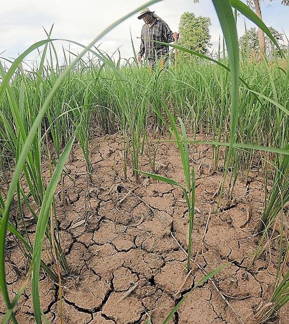 記録的な干ばつで干上がった田んぼ=9日、タイ北部ノンブア、染田屋竜太撮影