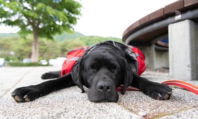 旅の合間に休憩する「センポ」=山梨県鳴沢村、諫山卓弥撮影