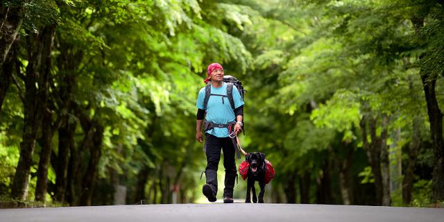 富士山麓(さんろく)の深い緑の中の一本道を、飼い犬「センポ」の進むまま、歩く。「少しの勇気と好奇心があれば、誰でも歩く旅は楽しめます」=山梨県鳴沢村