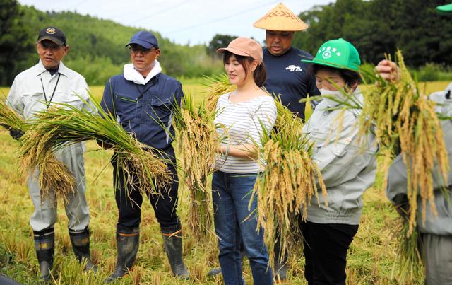 刈り取った稲を手にする関係者=大熊町大川原